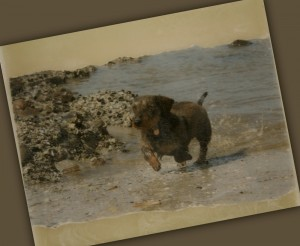 Timo, foto op canvas met gescheurde randen, zandkleurig